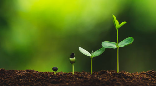 The Basics of B2B Lead Nurturing